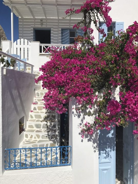 Bougainvillea in front of a whitewashed home in Santorini