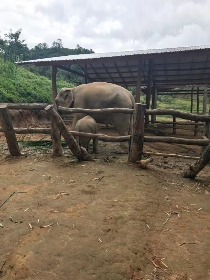 Arriving at Blue Tao Elephant Village