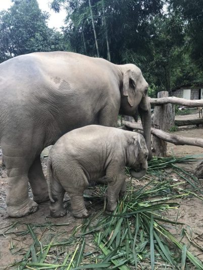 Lucky the elephant and her baby Valentine