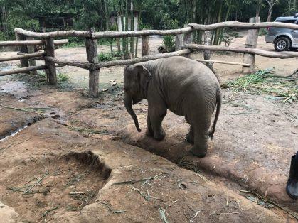 Valentine the elephant