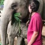 Meeting Lucky the elephant