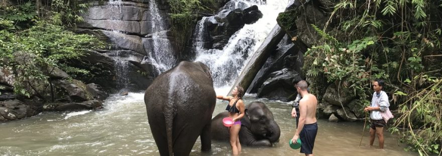 Washing elephants in Thailand