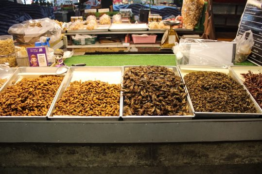 Fried bugs at Chiang Mai Market