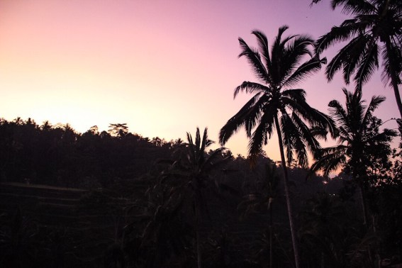 First light at Tegalalang Rice Terraces in Ubud, Bali