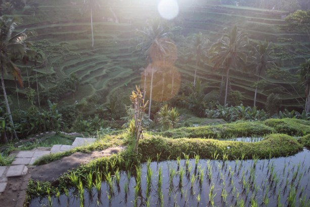 unlight coming through the trees Tegalalang Rice Terraces Ubud Bali