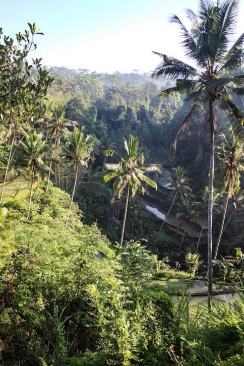 View from the top of Gunung Kawi Ubud Bali