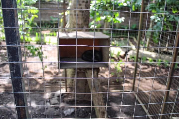 Kampung Kopi Coffee Plantation Ubud Bali