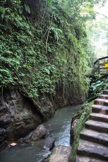 gorge within monkey forest ubud bali