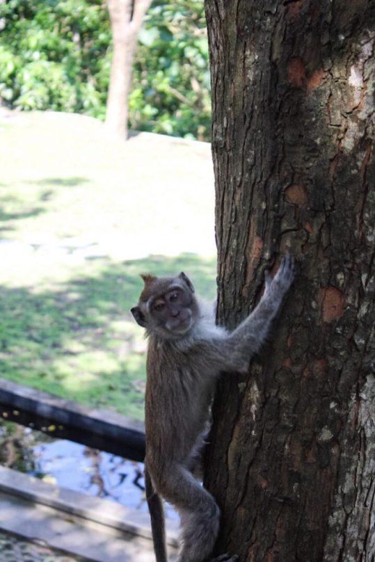 Monkey on a tree monkey forest ubud bali
