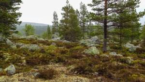 Skog vid Hävlingen
