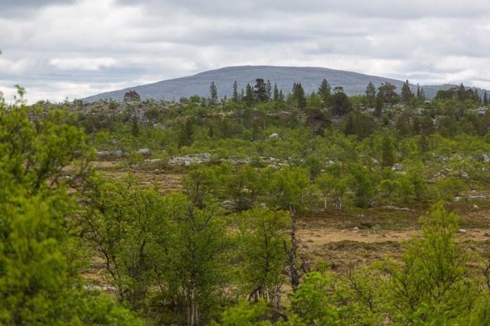 Rogens naturreservat