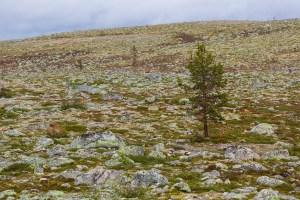 Stenig natur vid Storrödtjärn
