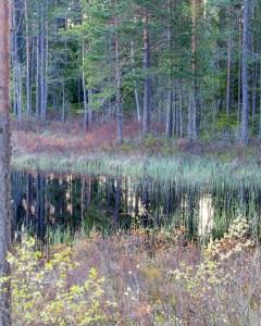 Vid Kråksjön