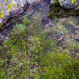 Undervattensgrönska