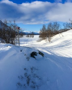 Vinterleden ner mot Abiskojaure