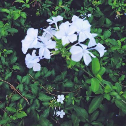Spring Break Presidio Park