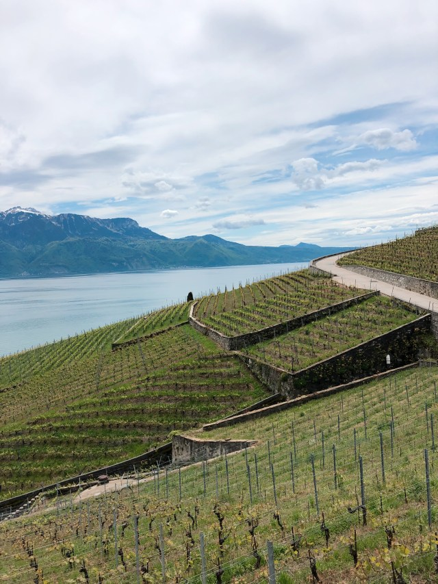 Lavaux vineyard hike