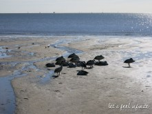 Cairns' beach