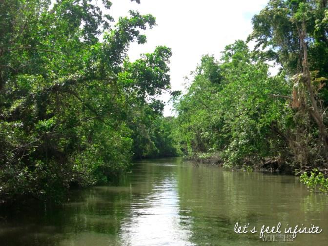 Daintree River 4