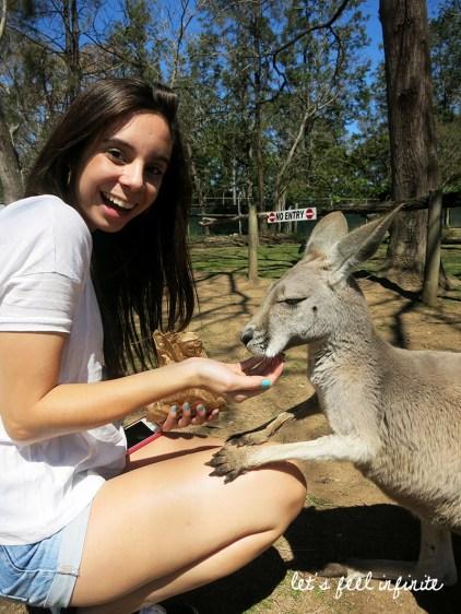 Lone Pine - Feeding the kangaroos