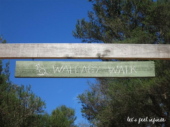 Moonlit Sanctuary - Wallaby Walk