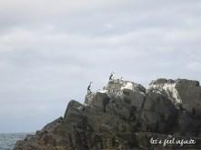 bruny-island-seabirds