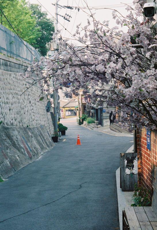 首爾 / 街道 / 記憶碎片 | 膠片的味道