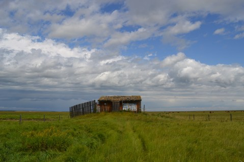 This August, approaching the Francis Viewpoint bird blind, which used to be right on the edge of the lake.