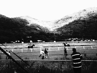 boxing day horse races
