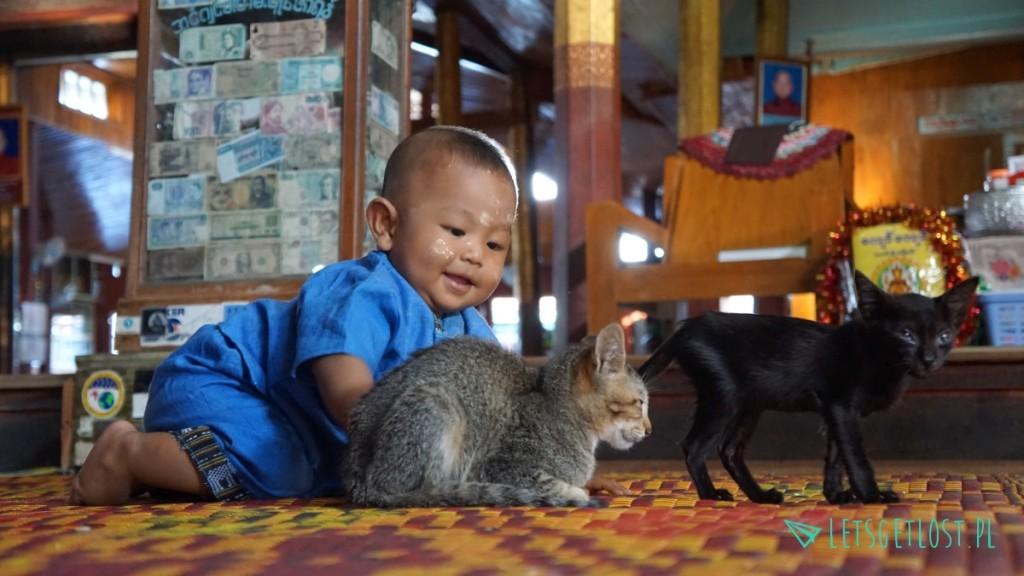 świątynia jumping cats