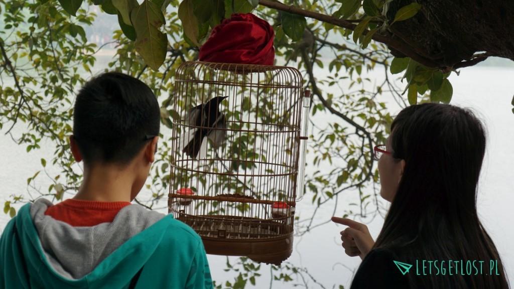 Ptak w klatce w Hanoi