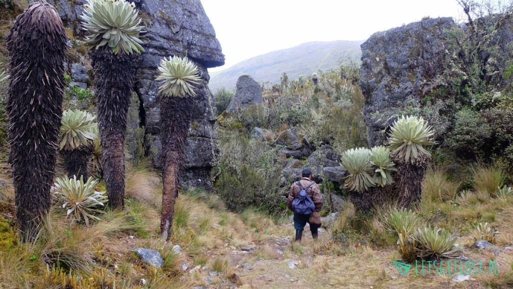 Trekking w Paramo de Oceta w Kolumbii