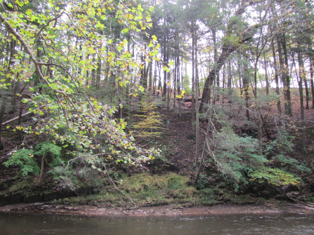 Trees on a steep slope with a creek inthe foreground
