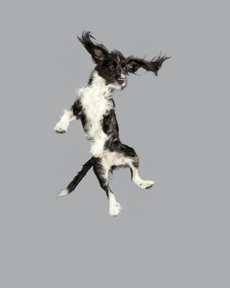 dog-flying