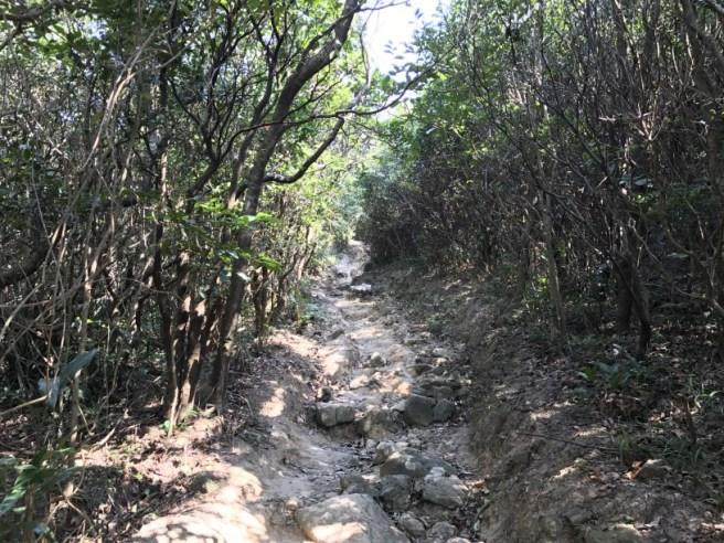 黃泥涌水塘公園>紫羅蘭山>紫羅蘭山徑>黃泥涌水塘公園