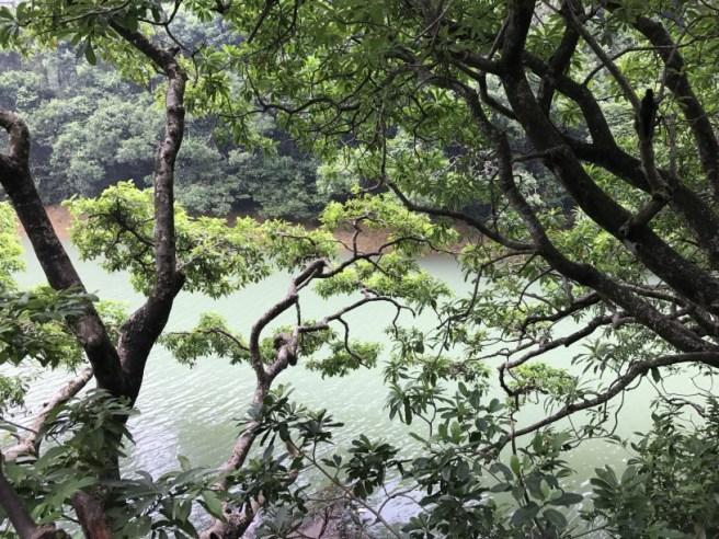 九龍副水塘>九龍接收水塘>石梨貝水塘>金山家樂徑>九龍水塘