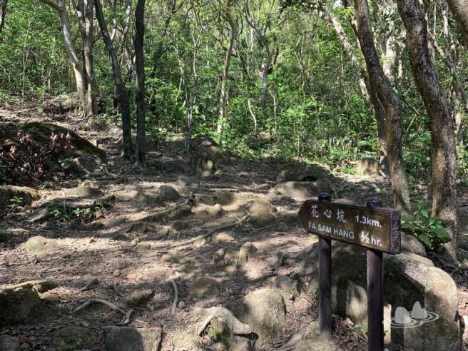 飛鵝山道>基維爾營>麥理浩徑第4段>花心坑>黃泥頭