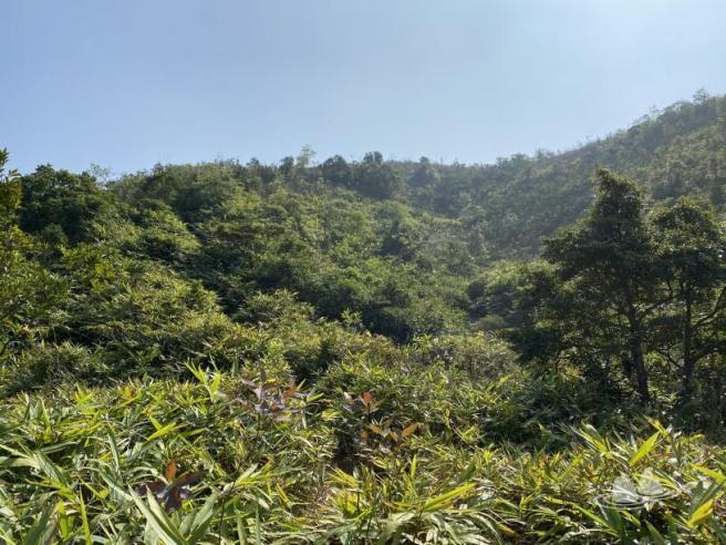 大水坑>女婆山>梅花古道>花心坑>黃泥頭花園