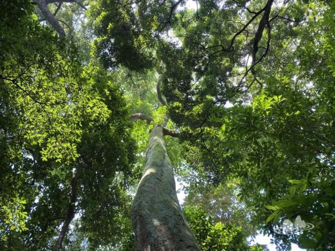 Hiking 4.10.2020 Fung Hang (36)