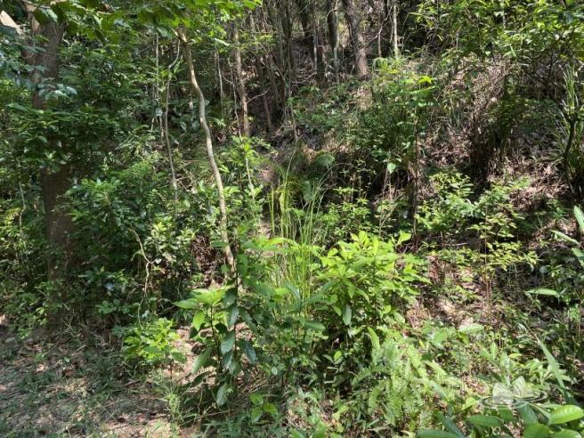 Hiking 4.10.2020 Fung Hang (4)