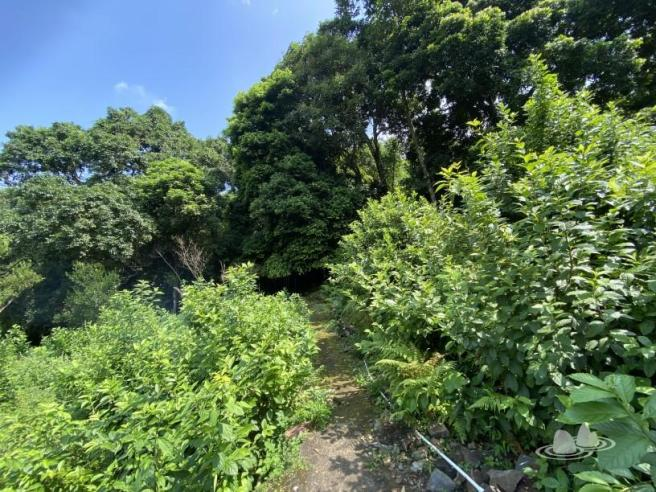 Hiking 4.10.2020 Fung Hang (40)