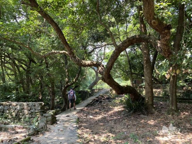 Hiking 4.10.2020 Fung Hang (48)