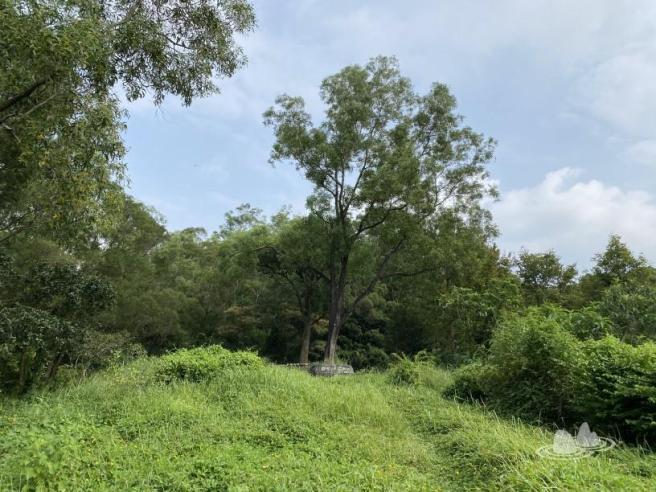 Hiking 4.10.2020 Fung Hang (78)