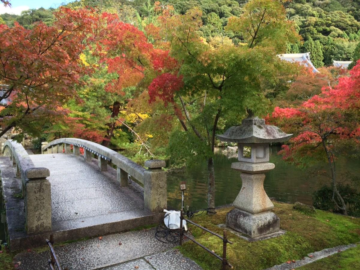 京都的紅葉① | 關西地區旅遊指南