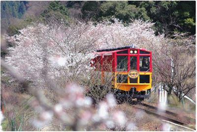 櫻花季嵐山小火車