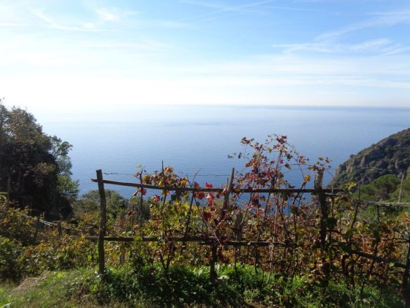 Passeggiata Portofino-Camogli. Scorci