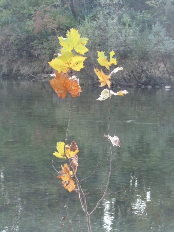 Le ultime foglie - sembrano quasi un'opera d'arte