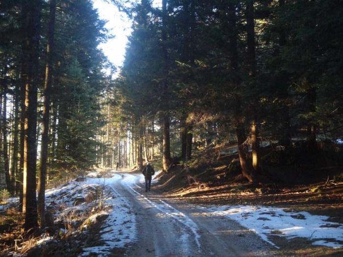 Sulle tracce dell'orso camminando nel bosco