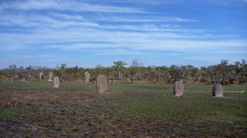 Termite-Mounds-1