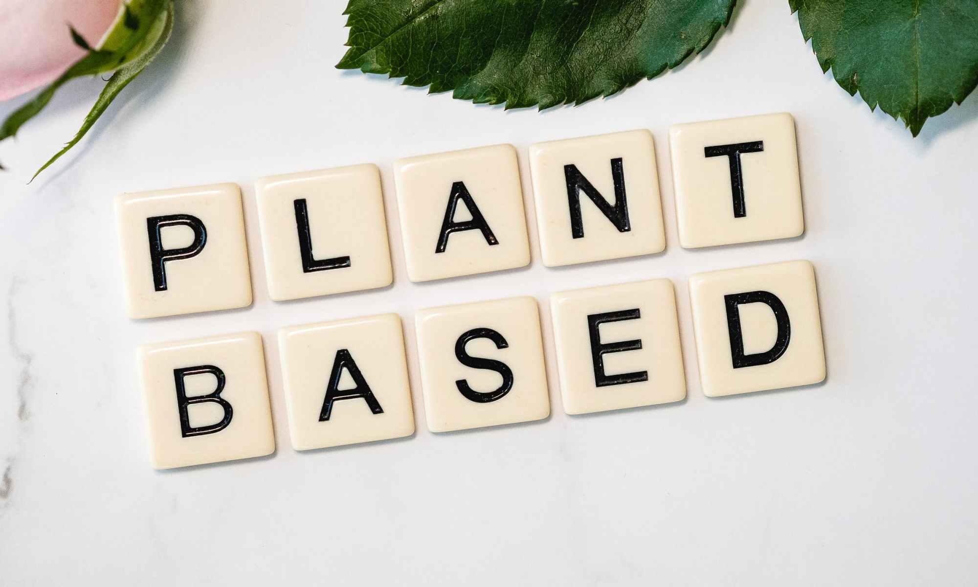 Plant-Based / Vegetarian / Vegan. What's the difference?